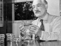 Микробиолог Зельман Ваксман — 10 фактов о Нобелевском лауреате родом из Украины