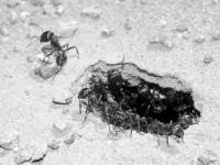 В США создали спам-фильтр, построенный по принципу муравьиной колонии