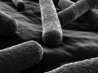 Исследователи создали нанороботов на основе бактерий