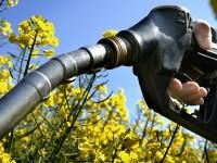 Учёные создали штамм дрожжей, которые ускоряют производство биотоплива в 3 раза