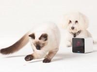 Petcube с доставкой в Украину обойдётся владельцам котов и собак в $230