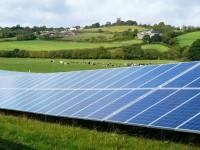 В Испании придумали солнечные батареи, которые работают на растениях