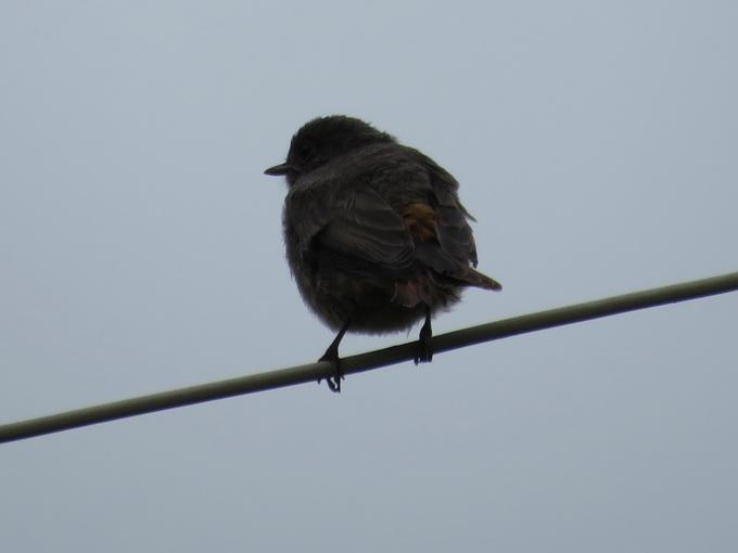 Немногие птицы подпустят вас к себе настолько близко, чтобы сфотографировать их крупным планом. Здесь без мощного зума не обойтись