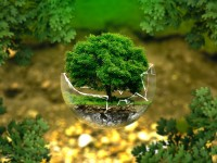 Для розвитку екопідприємництва в Україні запрацює «Зелена Школа»
