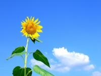Харків'янин створив концентратор теплової енергії сонця, ефективніший за всі аналоги
