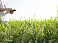 У Києві аграріям розкажуть і покажуть, як використовувати ІТ в сільскому господарстві