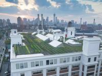 «Зелені» дахи — як у технологічному Нью-Йорку розвивають міські ферми та сади