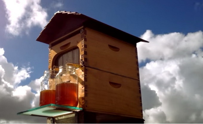 Инновационный улей позволяет пчеловодам доставать мед, не тревожа пчел