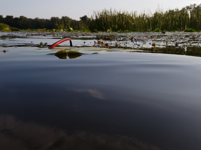 Очень эффектные снимки можно получить на «стыке» воздуха и воды: когда смартфон уже практически в воде, и лишь камера на пару сантиметров находится над водой (нажмите на изображение, чтобы просмотреть оригинал фото)