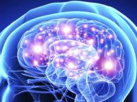 Как работает мозг человека при решении математических задач