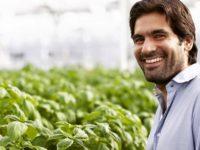 Історія Gotham Greens — стартап, що створює ферми в мегаполісах