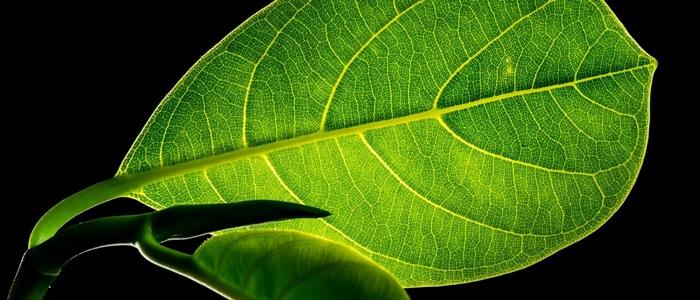 leaf-299931_1920-1400x600