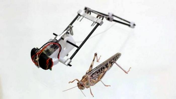 locust-robot-700