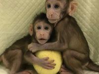 Успішне клонування мавп в КНР — наслідки та перспективи для медицини