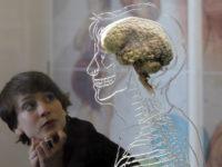 Між двох вогнів: чи доведеться дієтологам обирати між серцем і мозком?
