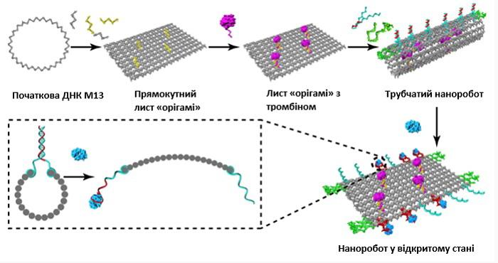 Схема дії ДНК-нанороботів