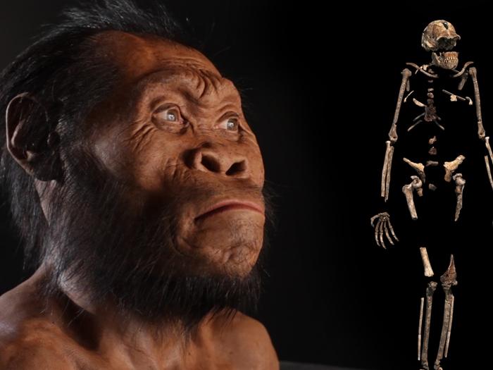 Большой – не значит умный, или время переосмыслить эволюцию