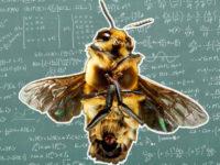 Розуміння нуля, як еволюційна перевага — тепер і для бджіл