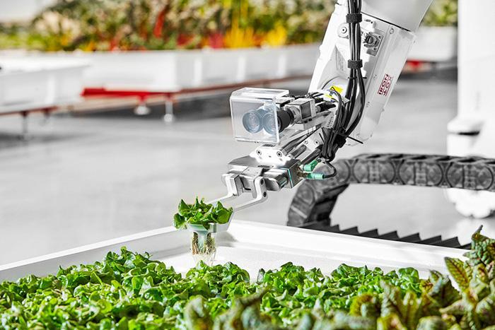 Робозелень або зелень, вирощена роботами. Відео