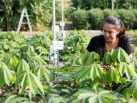 Як вчені «зламують фотосинтез», щоб зробити рослини більш продуктивними
