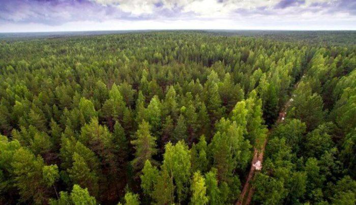 Посадити величезний ліс для збереження планети? Чи це є вихід?