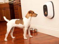 Розвиток і зростання Pet Tech