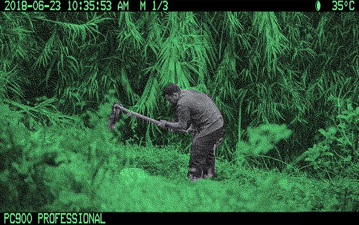 «Випадковий людський улов» на камерах у дикій природі