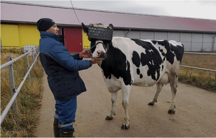 Якщо експеримент виявиться позитивним, фермери планують одягти окуляри VR також на овець та свиней